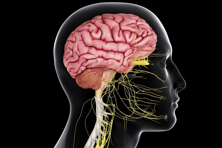 brain_spinal_cord-57fe96b15f9b5805c26d5072